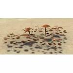Mushrooms, Sporous Browncap