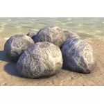 Cocoons, Dormant Cluster
