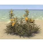 Flowers, Yellow Oleander Cluster