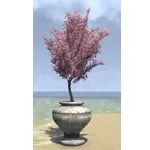 Alinor Potted Plant, Perpetual Bloom