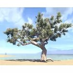 Tree, Sea Grapes
