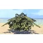 Vines, Sun-Bronzed Ivy Cluster