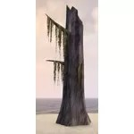 Stump, Mossy Cypress