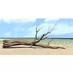 Log, Fallen Laurel