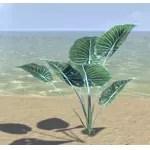 Plant, Cerulean Spadeleaf