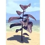 Plant, Purple Spadeleaf