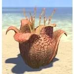 Plant, Rafflesia