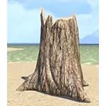 Stump, Rotten Pine