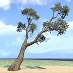Tree, Heavy Ash