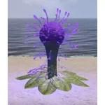Plant, Dendritic Hist Bulb