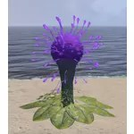 Plant, Hist Bulb