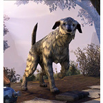 Whiterun Wolfhound