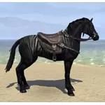 Black Fredas Soot Stallion