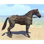 Treasure Hunter's Horse