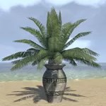 Elsweyr Potted Plant, Cask Palm