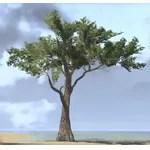 Tree, Desert Acacia Tall