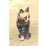 Senche-Serval Kitten