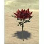 Flower, Dibella's Promise
