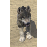 Boralis Gray Wolf Pup
