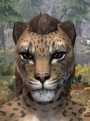 Morthal Champion Face Markings - Khajiit Female Front