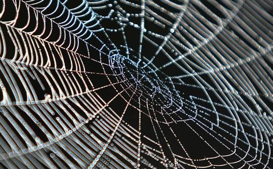 Questa immagine ha l'attributo alt vuoto; il nome del file è sognare-ragni-significato.jpg