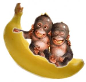 singe-heureux
