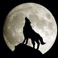 Les lundis de l'environnement: C comme canis lupus ou comment ménager la fascination de l'homme pour le loup?...