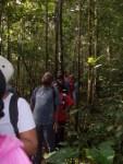 Les randonneurs en pleine forêt