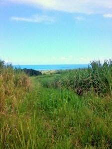 vue-du-grand-cul-de-sac-marin