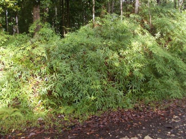Aspect de la végétation2