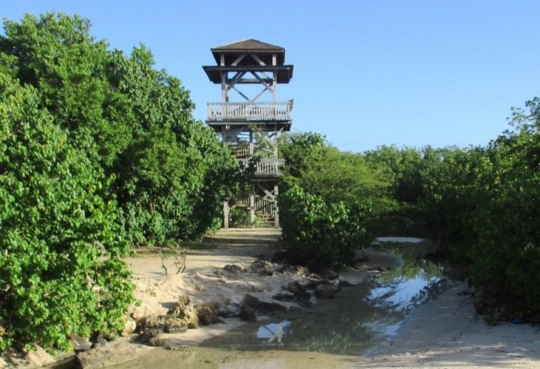 Tour d'observation de la mangrove