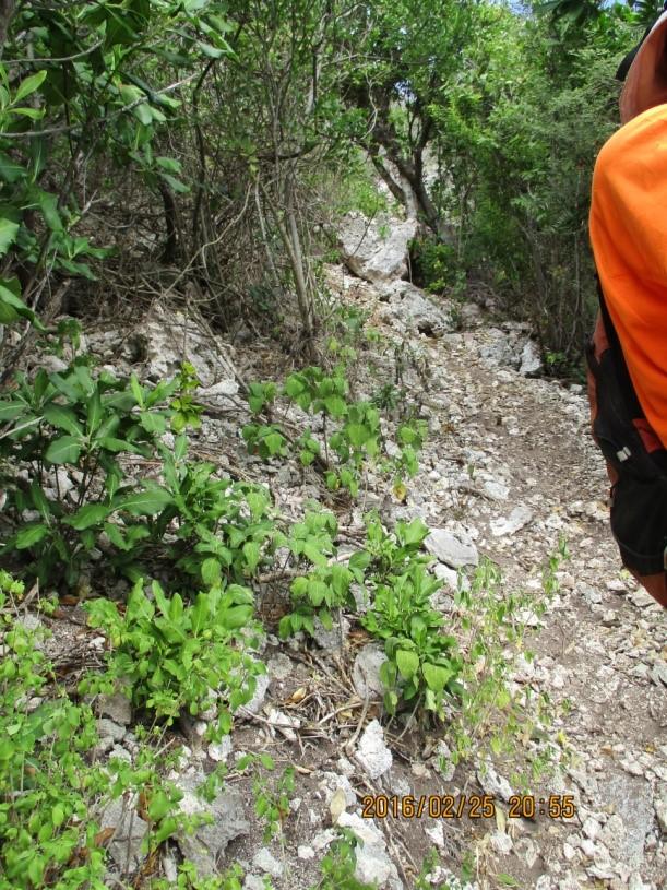 Sentier rocailleux