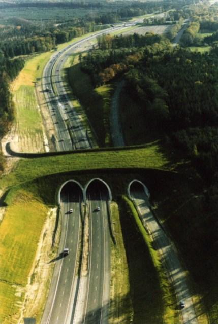 Puentes bosque sobre autopistas
