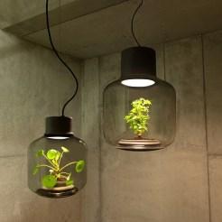 diseño interno plantas