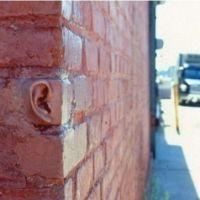 Las paredes oyen / The walls have ears