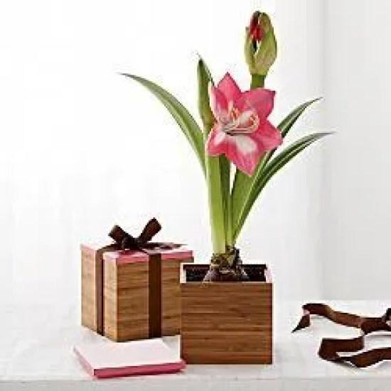 regalos-para-el-dia-de-san-valentin-2015-caja-con-una-flor
