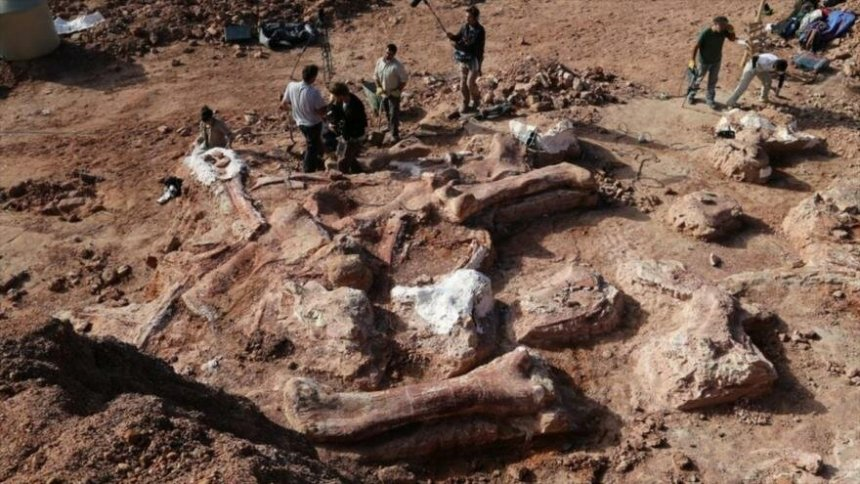 fosiles patagonia