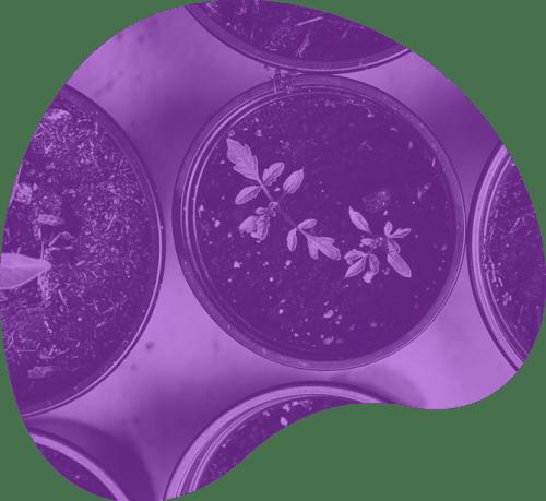 plantando-a-semente-espaco-yba