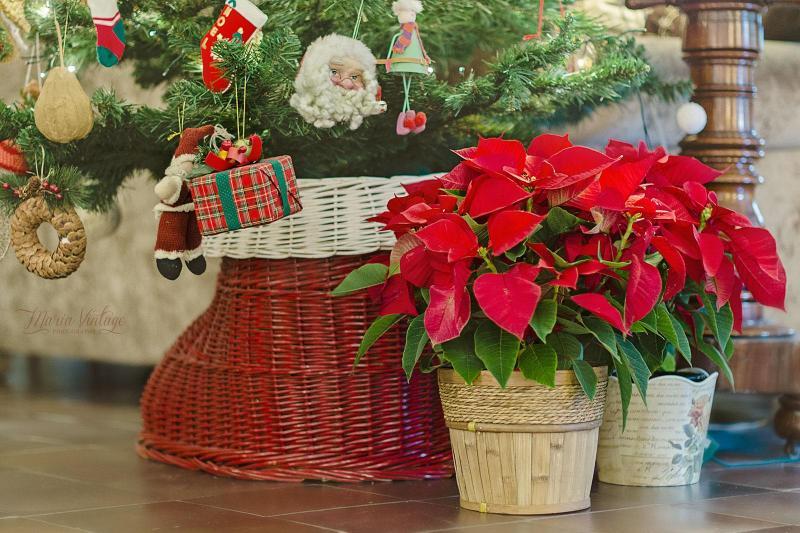 Vient de commencer à dater des cadeaux de Noël