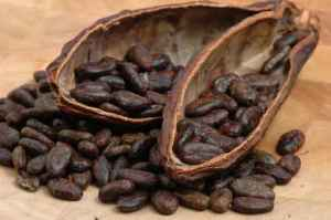Cocoa (cacao) beans on a beanpod with focus on foreground