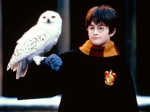 1449487321-harry-potter-hedwig-pic