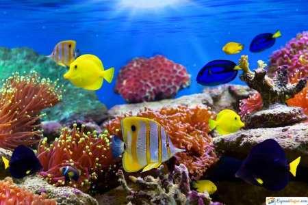 especies zoo aquarium madrid