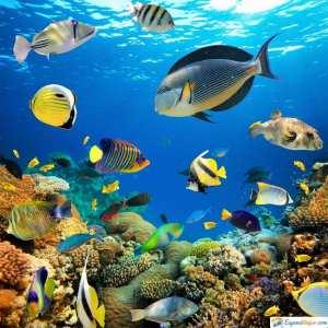 peces zoo aquarium madrid