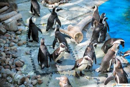 pinguinos del zoo de madrid