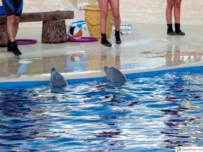 zoo aquearium madrid