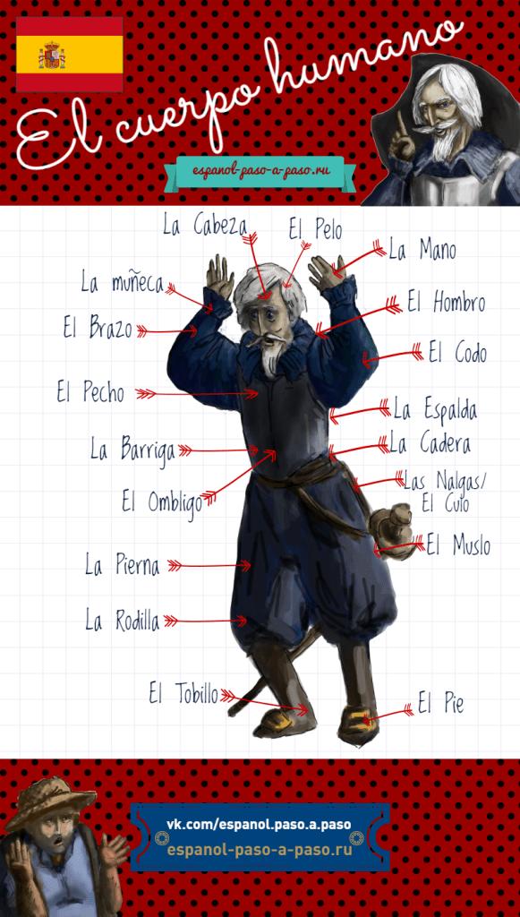 VOCABULARIO-EL CUERPO HUMANO