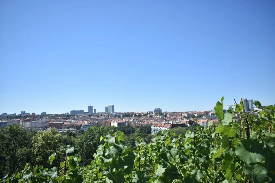 vista desde el viñedo en Praga