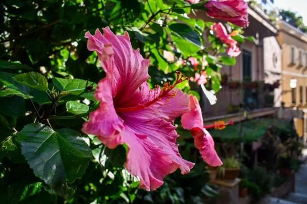 jardines-comunales-taormina