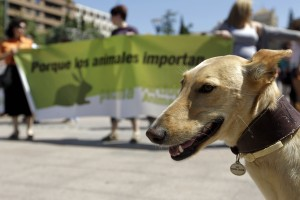 Concentracion contra el maltrato animal en los jardines del Triunfo.