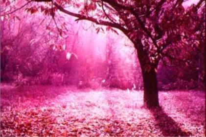 [Novidades] A Doce ILusão do Falso Mundo cor de rosa (1/2)